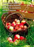 Cartoline-2-Serie-11