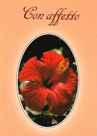 Con affetto - Libretto di auguri (05D 127) (Spillato)