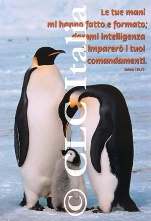 Poster CLC 10