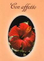Con affetto - Libretto di auguri (05D 127)