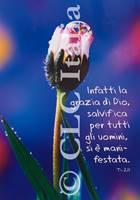 Poster CLC 31